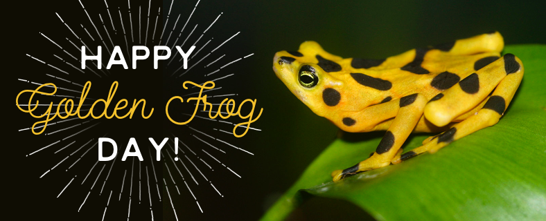 Panamanian Golden Frog Day